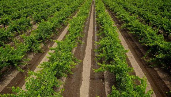 agricoltura ecosostenibile cos'è e perché dovrebbe interessarci